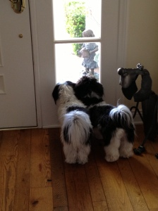 Dogs looking out
